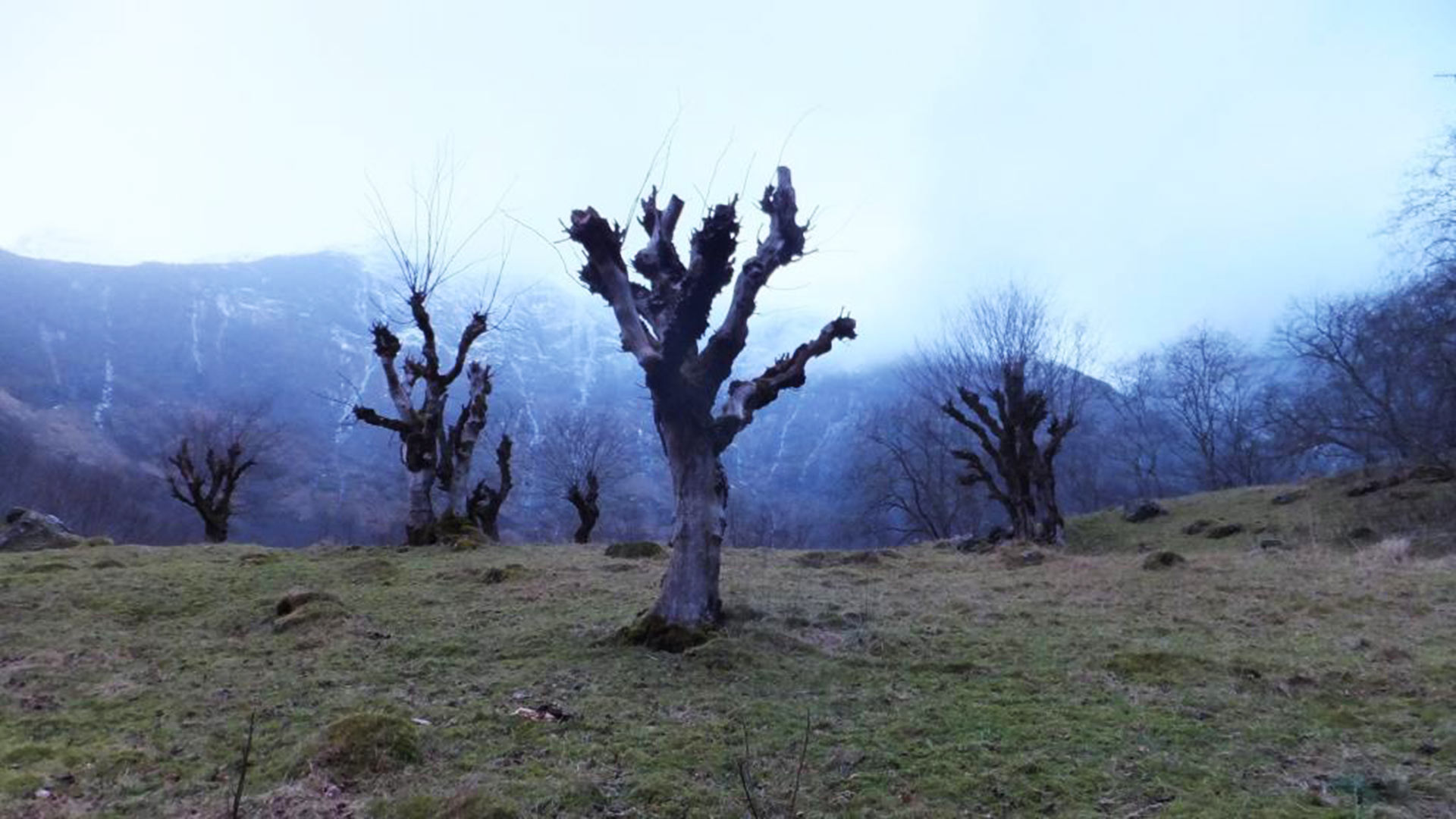 Kopfbäume.